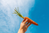 Hidratação com cenoura: conheça os benefícios dessa receita caseira