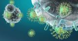 Sistema Imunológico: o que é e como funciona